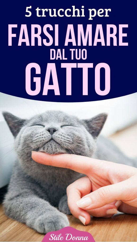 Deve amare i gatti sito di incontri