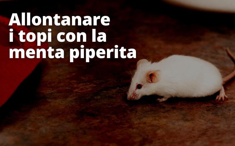 Menta piperita contro i topi