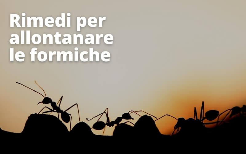 Rimedio contro formiche