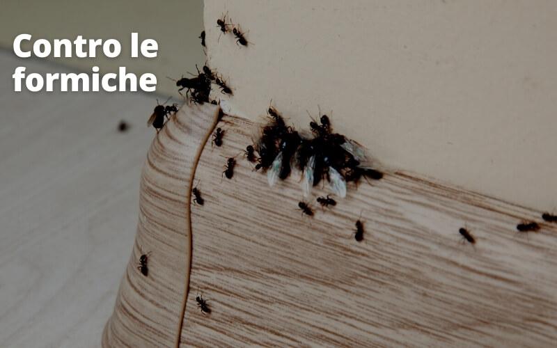 Sale contro le formiche