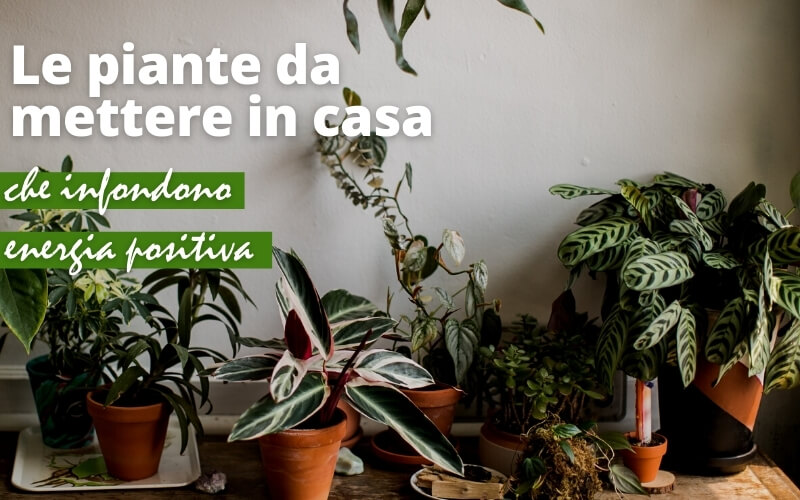 Piante feng shui: 12 piante per far circolare le energie di casa