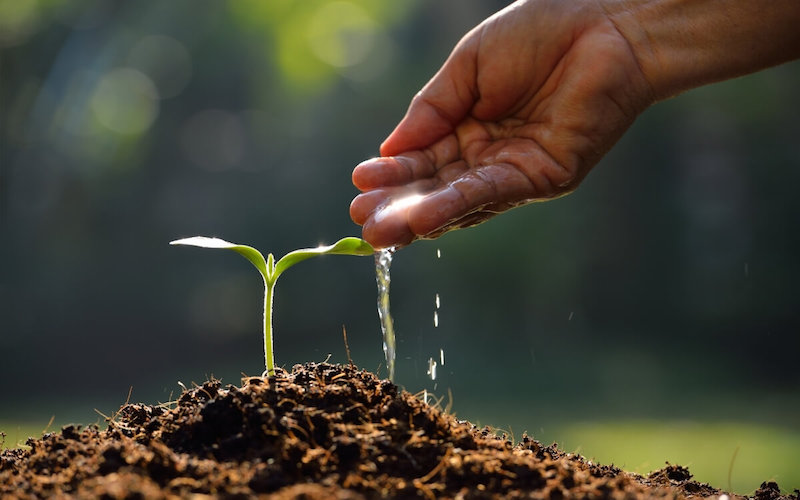 Decontaminare i semi