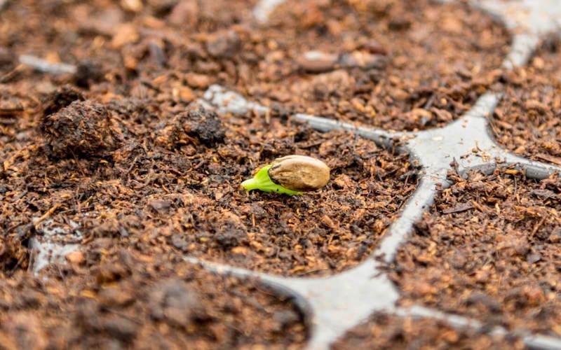 germinazione dei semi