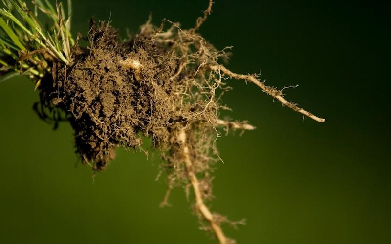 Rivitalizzare le radici delle piante