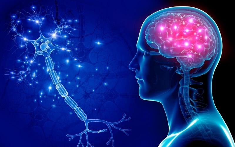 benefici cervello