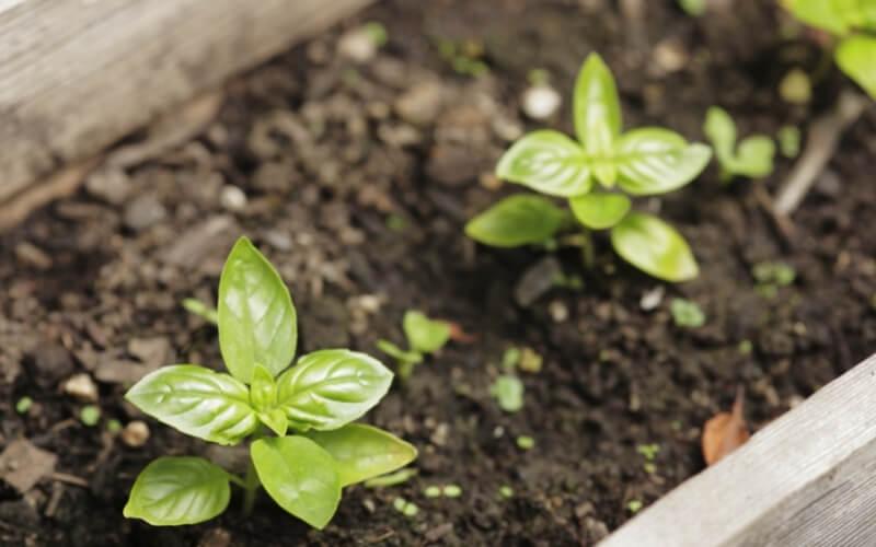 Come piantare i semi